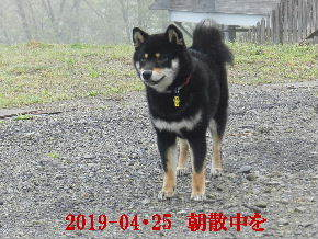 2019-04・25 今日の麻呂 (1).JPG