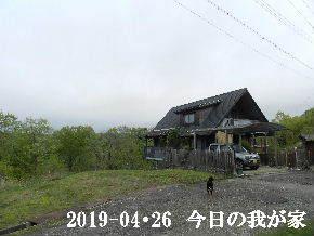 2019-04・26 今日の里山は・・・ (1).JPG