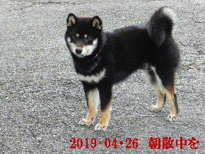 2019-04・26 今日の麻呂 (2).JPG