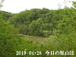 2019-04・28 今日の里山は・・・ (3).JPG