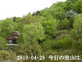 2019-04・28 今日の里山は・・・ (4).JPG