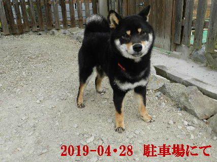 2019-04・28 今日の麻呂 (3).JPG