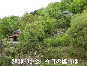2019-04・29 今日の里山は・・・ (4).JPG