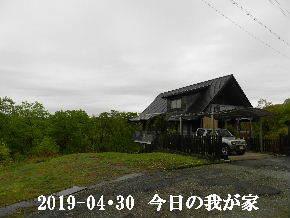 2019-04・30 今日の里山は・・・ (1).JPG