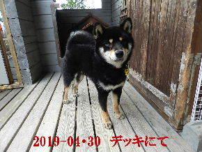 2019-04・30 今日の麻呂 (1).JPG