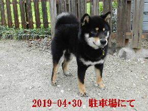 2019-04・30 今日の麻呂 (3).JPG
