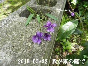2019-05・02 我が家の庭で・・・ (6).JPG