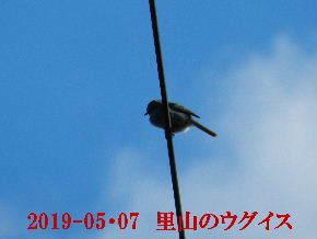 2019-05・07 今日の出遭い・・・ (1).JPG