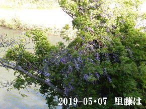 2019-05・07 今日の出遭い・・・ (4).JPG