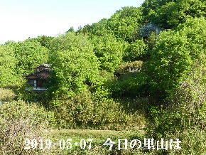 2019-05・07 今日の里山は・・・ (4).JPG
