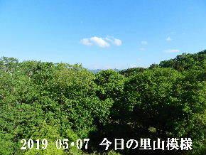2019-05・07 今日の里山は・・・ (6).JPG