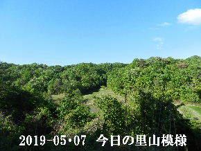 2019-05・07 今日の里山は・・・ (8).JPG