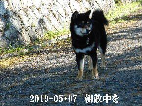 2019-05・07 今日の麻呂 (2).JPG