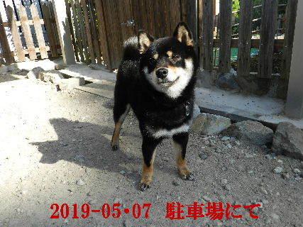 2019-05・07 今日の麻呂 (3).JPG