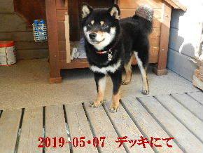 2019-05・07 今日の麻呂 (6).JPG