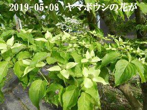 2019-05・08 今日の出遭い・・・ (1).JPG