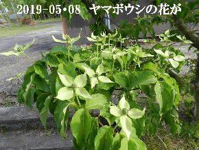 2019-05・08 今日の出遭い・・・ (2).JPG