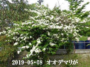 2019-05・08 今日の出遭い・・・ (4).JPG