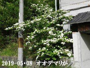 2019-05・08 今日の出遭い・・・ (6).JPG