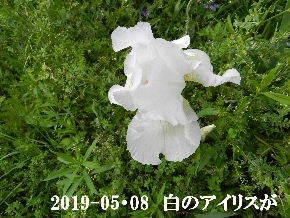 2019-05・08 今日の出遭い・・・ (7).JPG