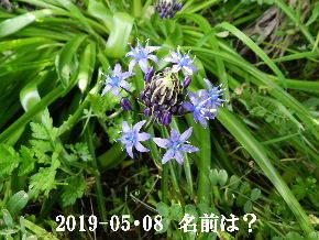 2019-05・08 今日の出遭い・・・ (8).JPG