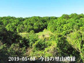 2019-05・08 今日の里山模様・・・ (3).JPG
