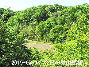 2019-05・08 今日の里山模様・・・ (4).JPG