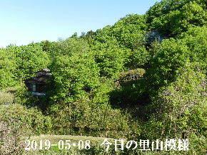 2019-05・08 今日の里山模様・・・ (5).JPG