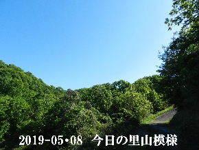 2019-05・08 今日の里山模様・・・ (6).JPG