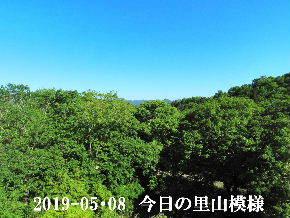2019-05・08 今日の里山模様・・・ (7).JPG