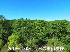 2019-05・08 今日の里山模様・・・ (8).JPG