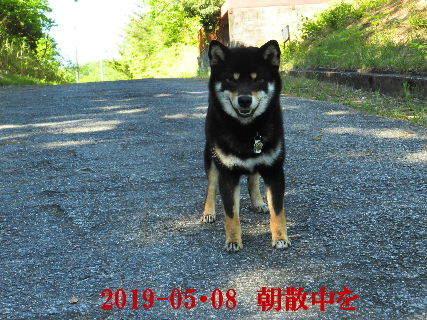 2019-05・08 今日の麻呂 (3).JPG