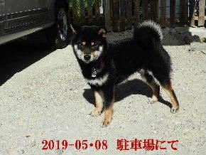 2019-05・08 今日の麻呂 (6).JPG