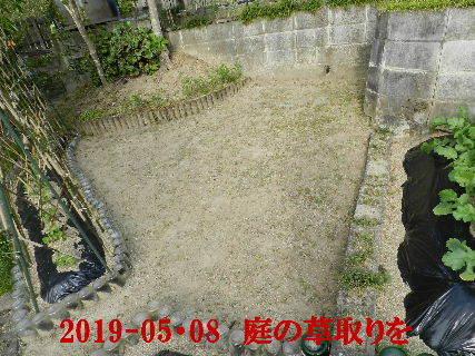 2019-05・08 我が家のスナップ・・・ (3).JPG