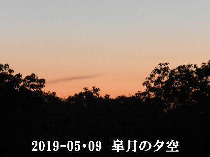 2019-05・09 里山の夕暮れ時 (1).JPG