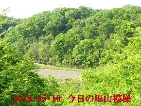 2019-05・10 今日の里山模様・・・ (4).JPG