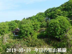 2019-05・10 今日の里山模様・・・ (5).JPG