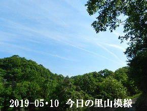 2019-05・10 今日の里山模様・・・ (6).JPG