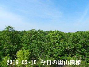 2019-05・10 今日の里山模様・・・ (8).JPG