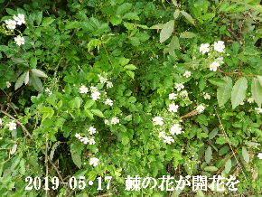 2019-05・17 今日の出遭い・・・ (1).JPG