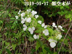 2019-05・17 今日の出遭い・・・ (11).JPG