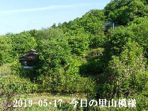 2019-05・17 今日の里山模様・・・ (4).JPG