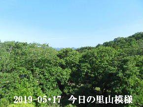 2019-05・17 今日の里山模様・・・ (5).JPG