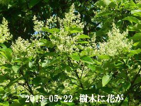 2019-05・22 今日の出遭い・・・ (3).JPG