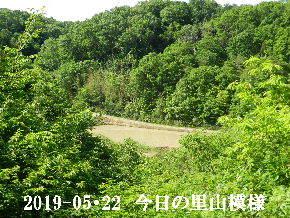 2019-05・22 今日の里山模様・・・ (3).JPG