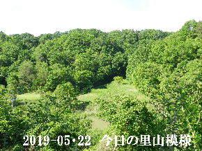 2019-05・22 今日の里山模様・・・ (7).JPG