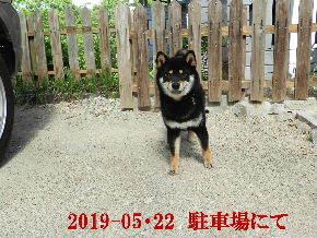 2019-05・22 今日の麻呂 (3).JPG