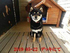 2019-05・22 今日の麻呂 (6).JPG