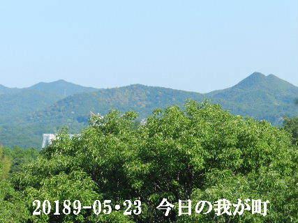 2019-05・23 今日の我が町.JPG