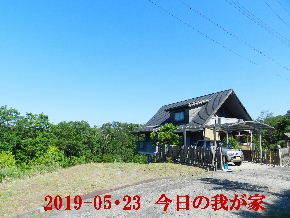 2019-05・23 今日の里山模様・・・ (1).JPG